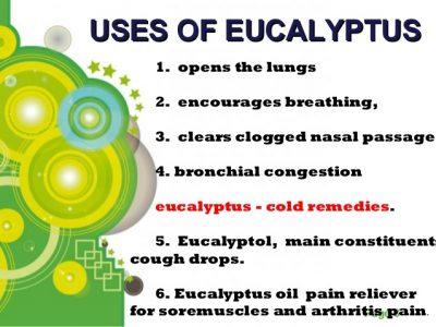 eucalyptus essential oil uses